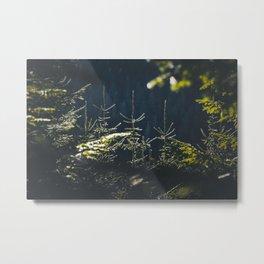 Spruce tops in Slovakia Metal Print