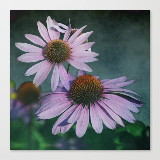 Beautiful summer with pink Echinacea / Daisy flowers Canvas Print