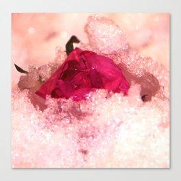 Frozen rose Canvas Print