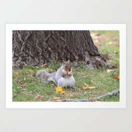 squirrel stopping for snack Art Print