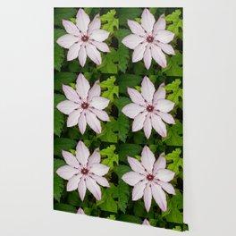 Pale Pink Clematis Wallpaper