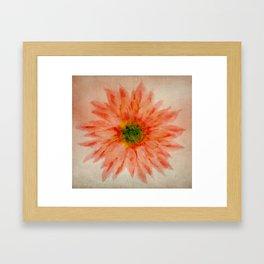 salmon flower Framed Art Print