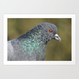 The great Indian pigeon Art Print