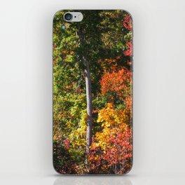 Changing Seasons iPhone Skin