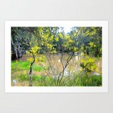 Australian Wildflowers Art Print