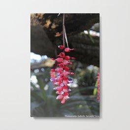 red exotic flower Metal Print