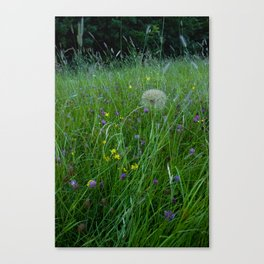 Field of flowers and Dandelions (2) Canvas Print
