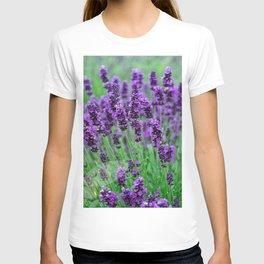 Lavender colors... T-shirt