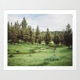 Green Pine Meadow Art Print