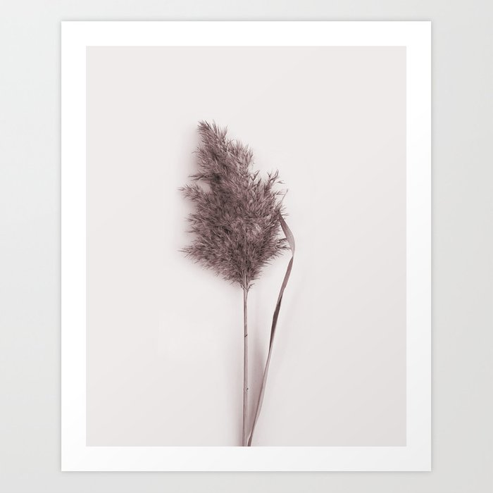 Discover the motif DRIED PAMPAS GRASS by Art by ASolo as a print at TOPPOSTER