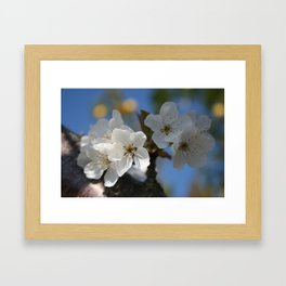 Close Up Of White Cherry Blossom Flowers Framed Art Print