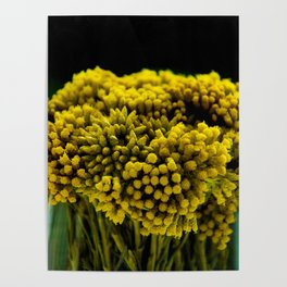 curry flower Poster