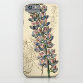 Flower 056 lupinus barkeri Mr Barker s Lupine23 iPhone Case