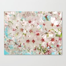 Cherry Blossom afternoon Canvas Print