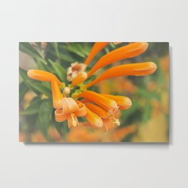 Orange Flower - Plant Photography Metal Print