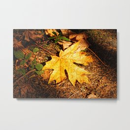 Orange Leaf on the Forest Floor Metal Print