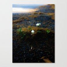 Sprouting an urban island Canvas Print