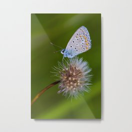 The butterfly and the delicate plant Metal Print