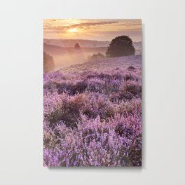 II - Blooming heather at sunrise, Posbank, The Netherlands Metal Print