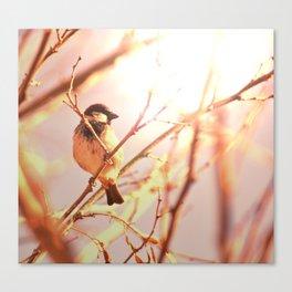 Morning sparrow Canvas Print