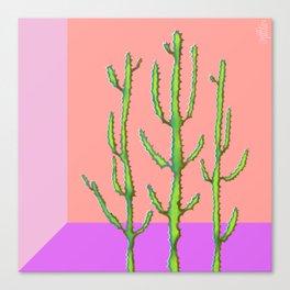 Three Amigos Cacti Canvas Print