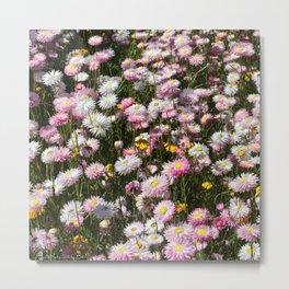 Flowers Everywhere!  Metal Print