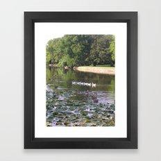 Ducks and Lilypads Framed Art Print