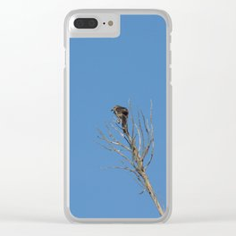 Brave small bird Clear iPhone Case