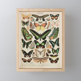Papillon II Vintage French Butterfly Chart by Adolphe Millot Framed Mini Art Print