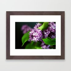 fresh lilacs Framed Art Print