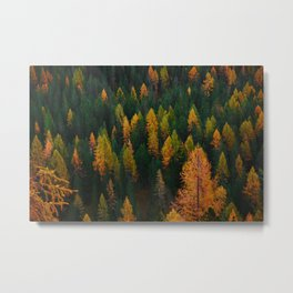 The Evergreens (Color) Metal Print