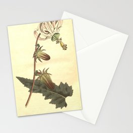 219-michauxia campanuloides, Rough-leaved Michauxia Stationery Cards