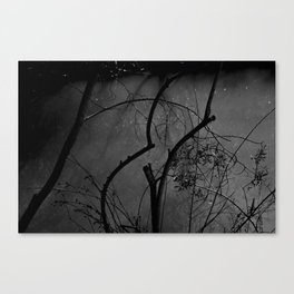 Eerie Woods Canvas Print