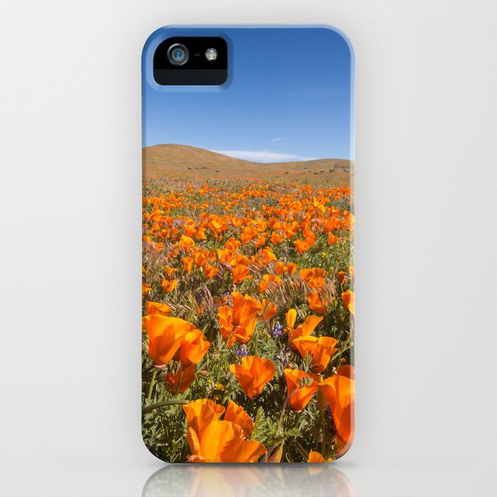 Blooming poppies in Antelope Valley Poppy Reserve iPhone Case