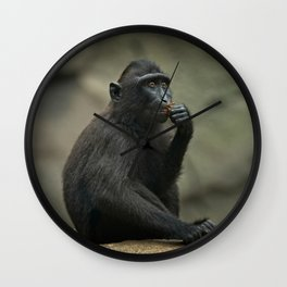 Celebes Crested Macaque Youngster Wall Clock