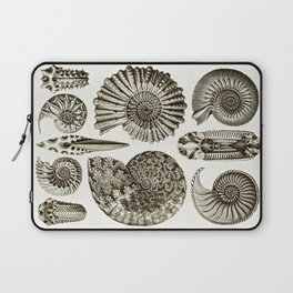 Ernst Haeckel Ammonitida Ammonite Laptop Sleeve