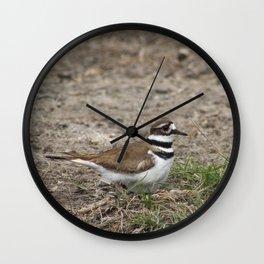 Concerned Killdeer Wall Clock