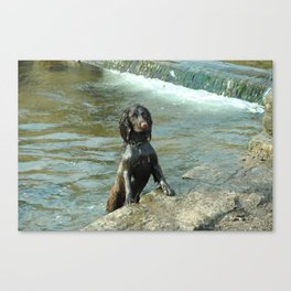 Puppy in the water  Canvas Print
