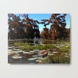 Cypress Swamp - Lake Martin LA Metal Print