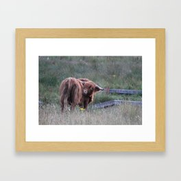 Highland Cow Scratching Itself Framed Art Print