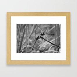 Dragonflies at Rest Framed Art Print