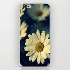 Fresh Daysies flowers 0944 iPhone & iPod Skin