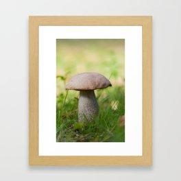 Boletus on grass. Autumn shot in forest. Shallow depth of field. Framed Art Print