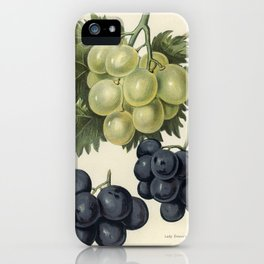 Vintage illustration of grapes  The Fruit Grower's Guide (1891) by John Wright. iPhone Case