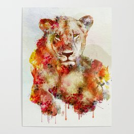 Resting Lioness Watercolor Painting Poster