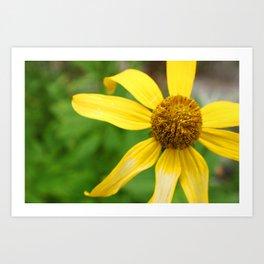 Wildflower Top Art Print