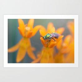 Solitary Wasp Art Print
