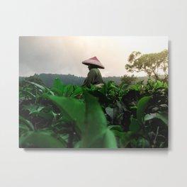 Indonesian Tea fields worker 2 Metal Print