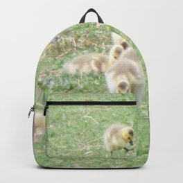 Baby Canadian Geese, Wild Geese, Animals in the Wild Backpack