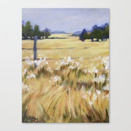 Fields of Gold - Acrylic Canvas Print
